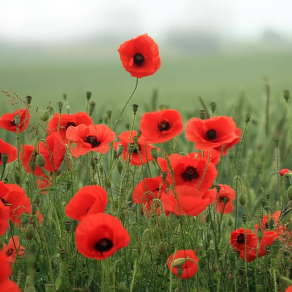 Armistice Day: The Great War and the words we mustn't forget